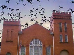 batsbelfry.jpg
